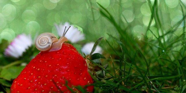 cosmetici naturali bava di lumaca